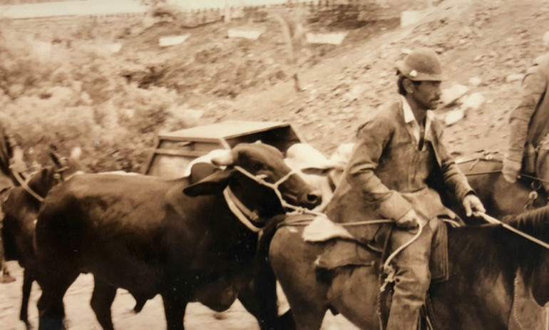 Vaqueiro descendo para missa com o boi ao lado