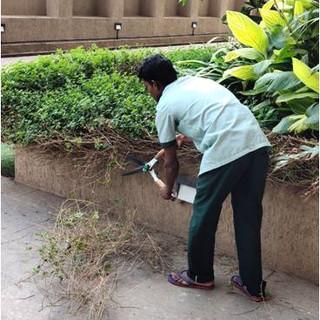 garden maintenance1.jpg
