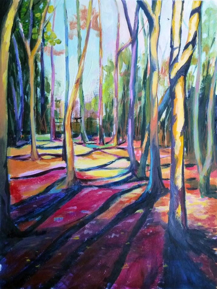 Woodland Shadows II