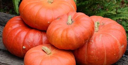 Pumpkin, Cinderella