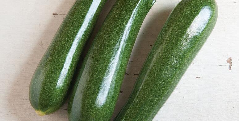 Zucchini, Dunja