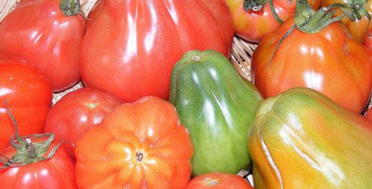 Tomato, Pomodoro Canestrino di Lucca