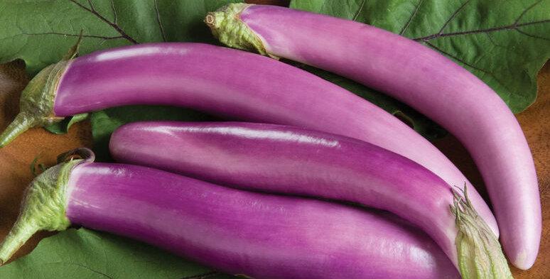 Eggplant, Orient Charm