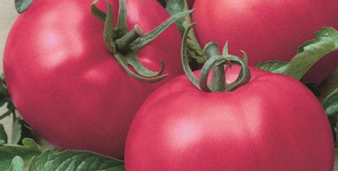 Tomato, Chef's Choice Pink