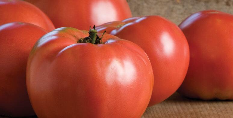 Tomato, Martha Washington