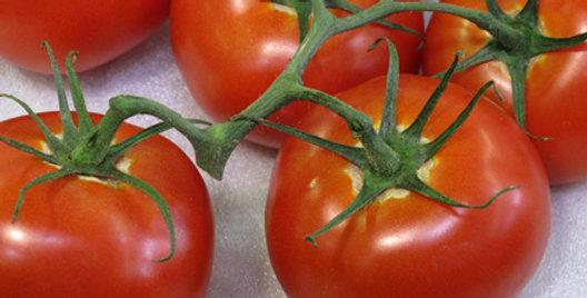 Tomato, Box Car Willie
