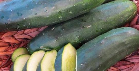 Cucumbers, Marketmore 97