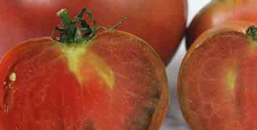 Tomato, Vorlon