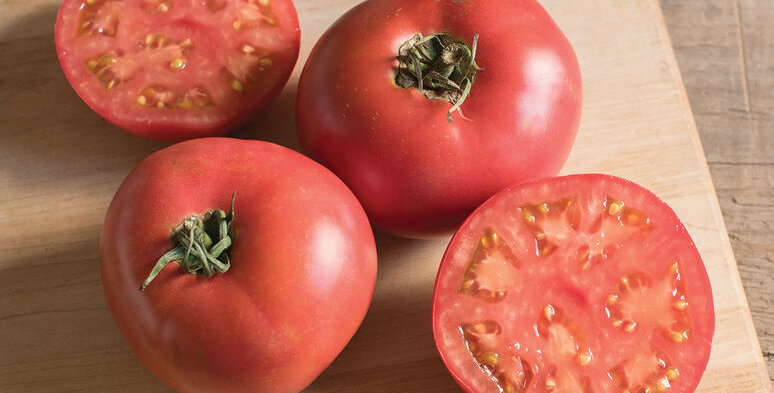 Tomato, Damsel