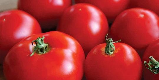 Tomato, Stupice