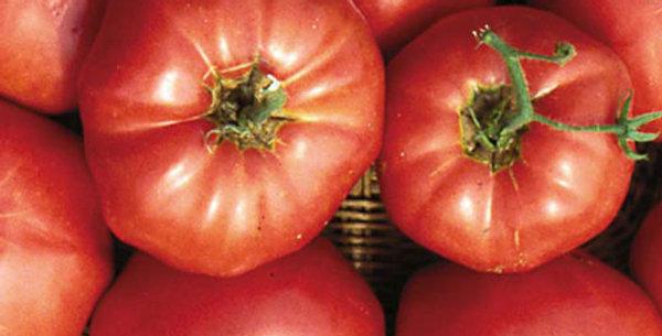Tomato, Brandywine Pink—Sudduth's Strain