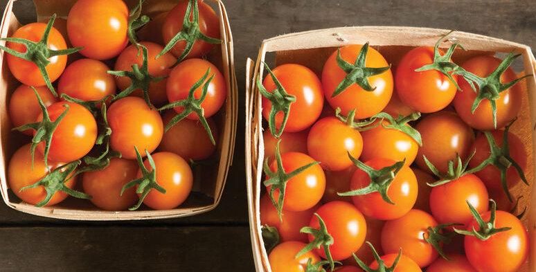 Tomato, Sungold