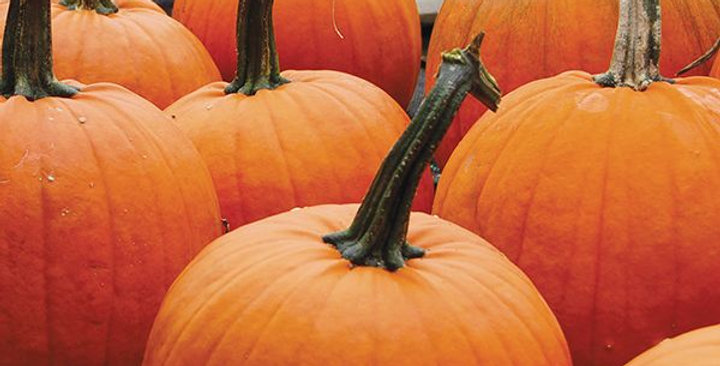 Pumpkin, Cider Jack