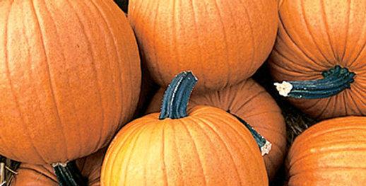 Pumpkin, Racer