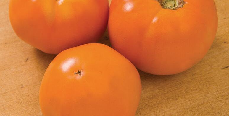 Tomato, Chef's Choice Orange