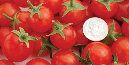 Tomato, Sweet Aperitif