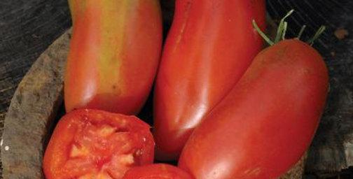Tomato, San Marzano Gigante 3