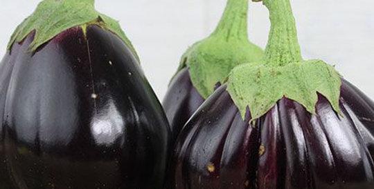 Eggplant, Black Beauty