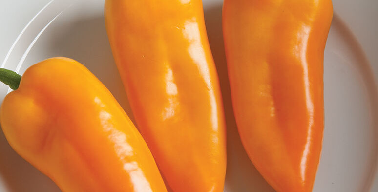 Pepper, CORNITO GIALLO