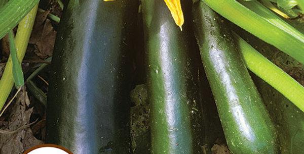 Zucchini, Black Beauty