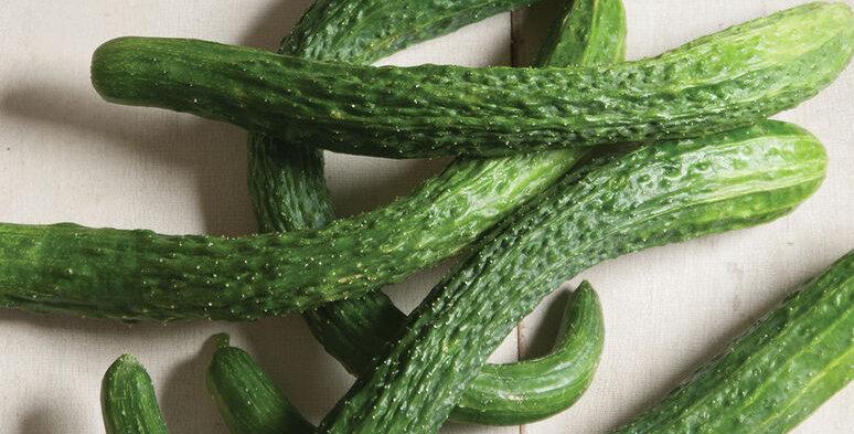 Cucumbers, Suyo Long
