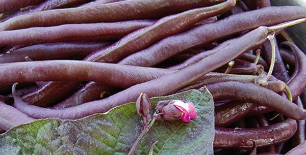 Beans - Bush, Royalty Purple (6-pack)