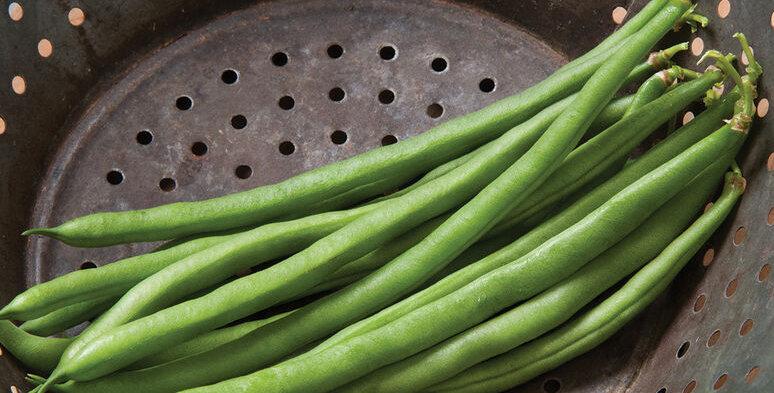 Beans - Bush, Jade (6-pack)