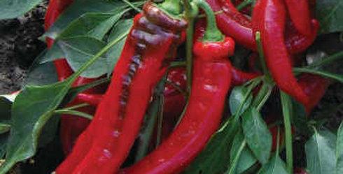 Pepper, JIMMY NARDELLO