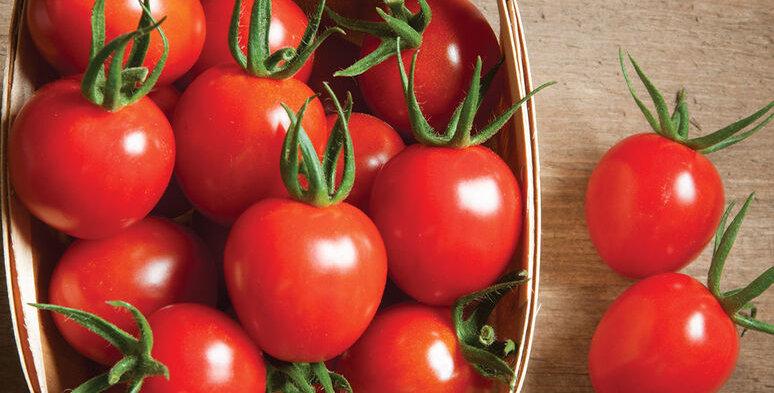 Tomato, Cherry Bomb