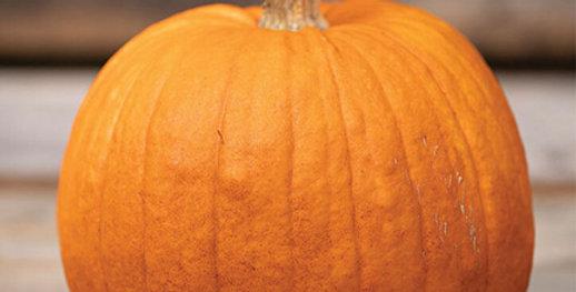 Pumpkin, New England Pie