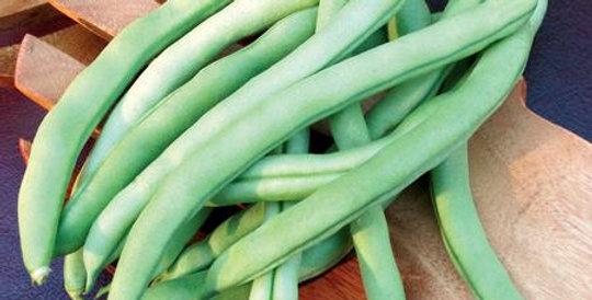 Beans - Pole, Blue Lake (6-pack)