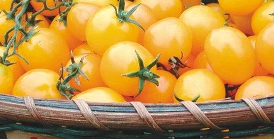Tomato, Gold Nugget