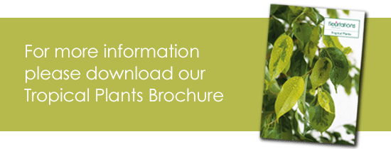 Tropical Plants Brochure