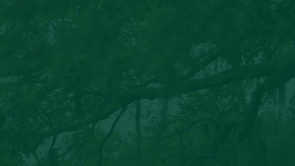 mossy-trees-green.jpg