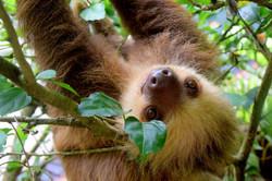 sloth-1879999_1280