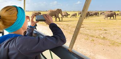 women elephants africa.jpg