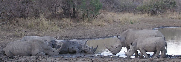 Rhinos meeting from Janelle.jpg