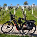 bike-vineyard_640.jpg