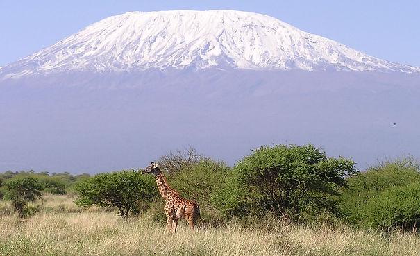 Kilimanjaro and giraffe.jpg