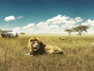Why safaris are THE most rejuvenating travel experiences