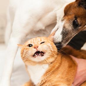 Cancer chez le chien ou le chat