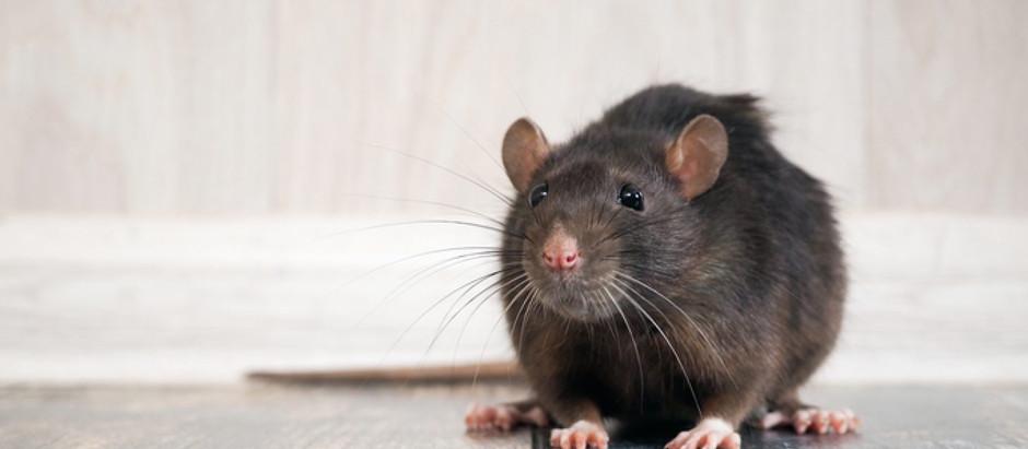 Les animaux domestiques & les appâts