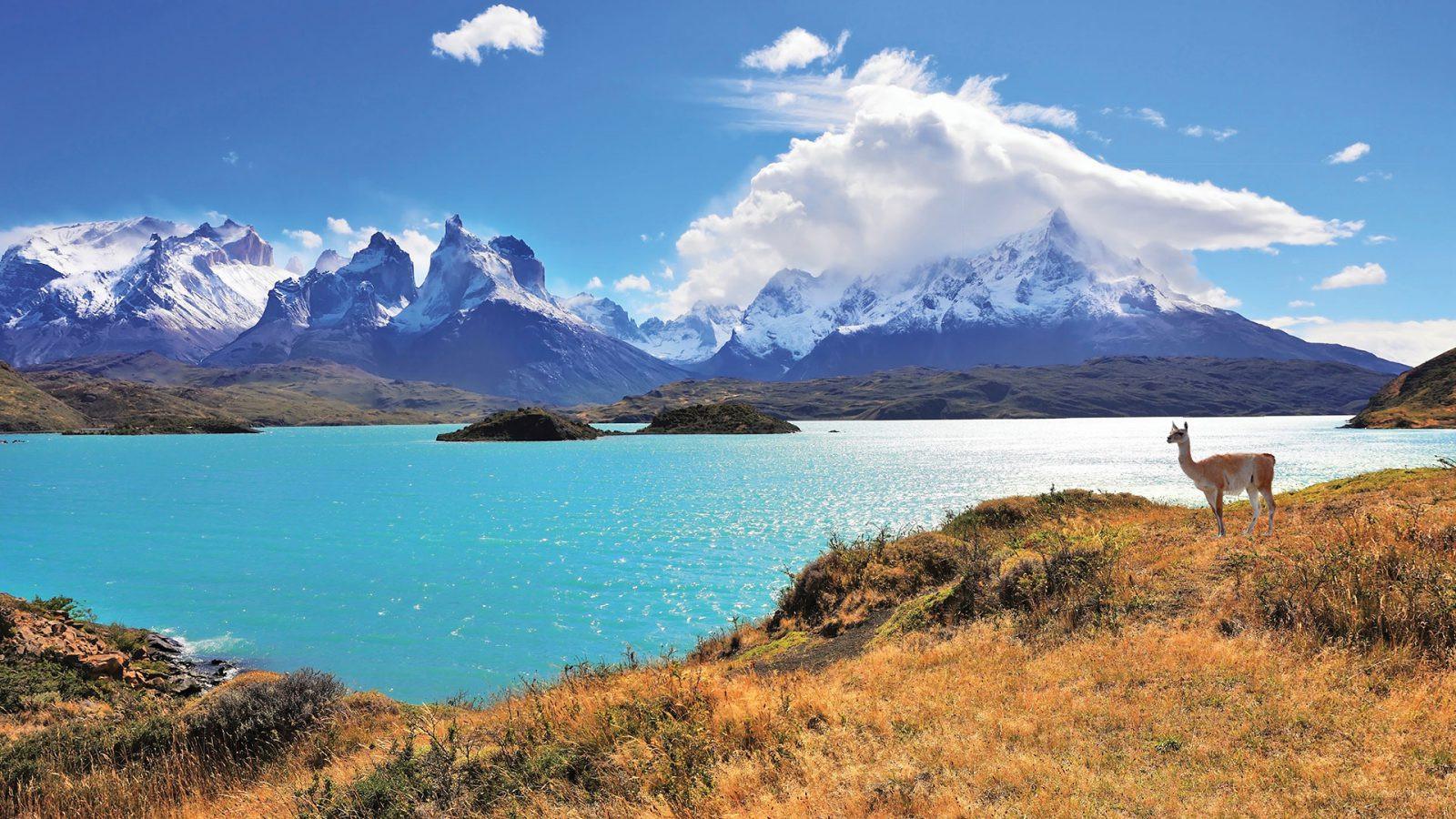 Guanaco-in-Torres-del-Paine-National-Par