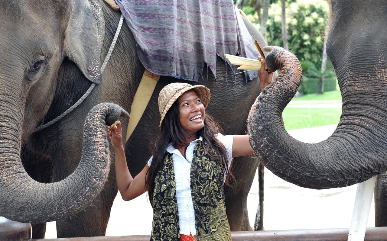 Elefantes, Atrações Turísticas, Viagem T