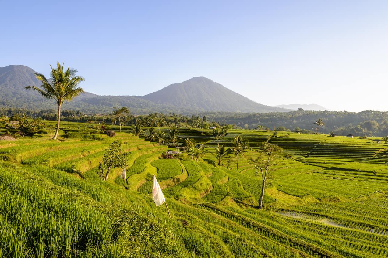 Terraço_arroz,_Jatiluwih,_Bali,_Indonési
