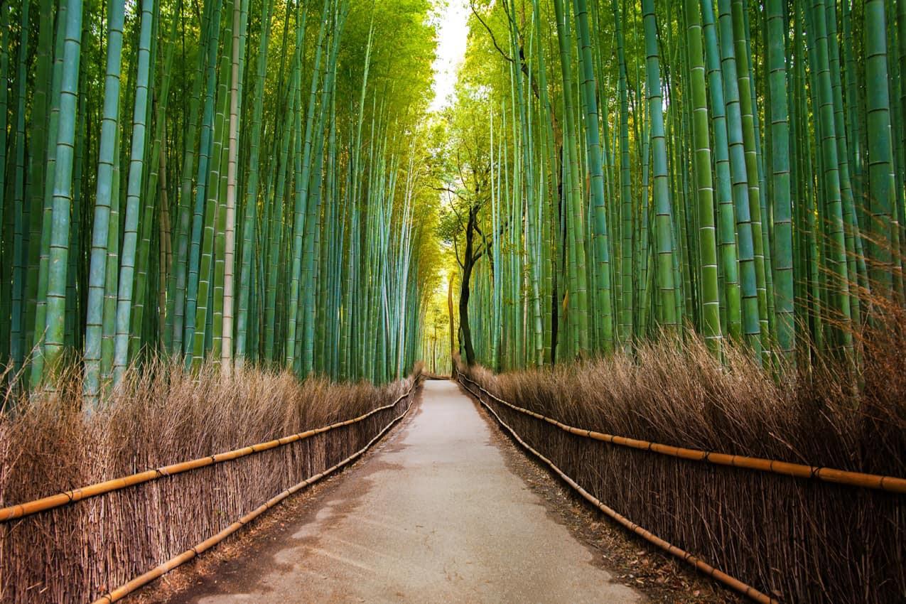 floresta_de_bambu,_Arashiyama,_Quioto,_P