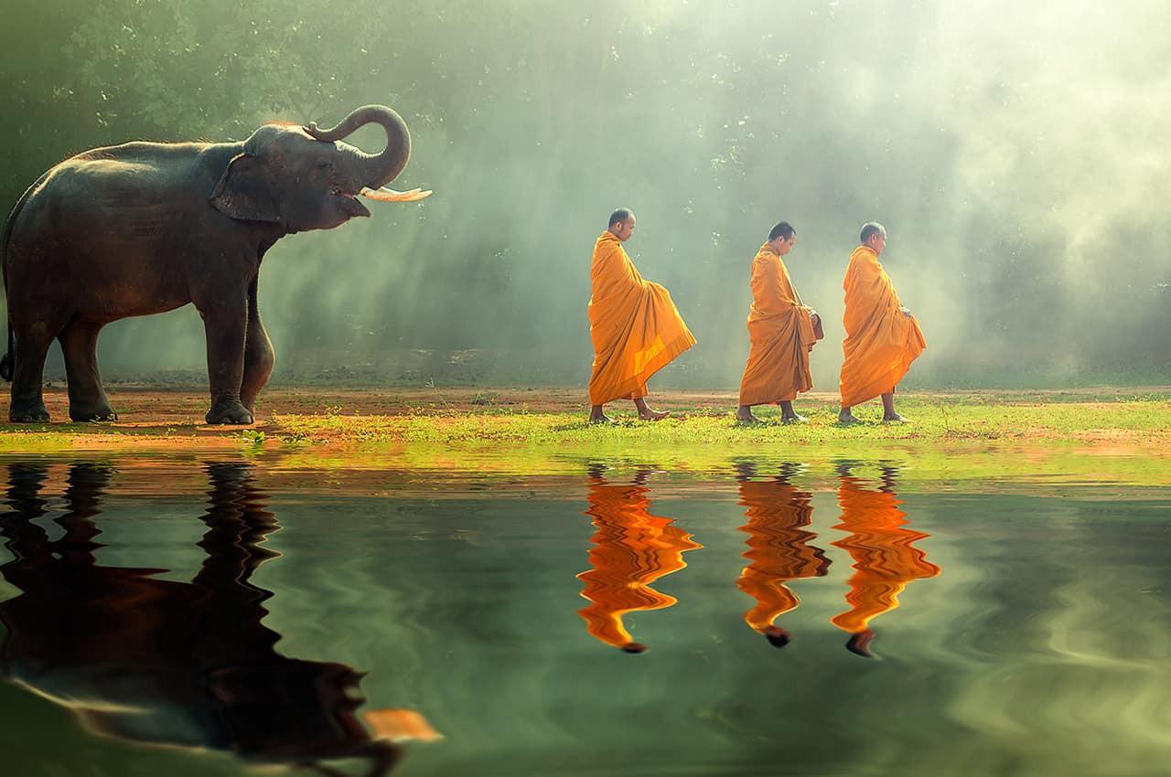 Monges budistas e elefante.jpg