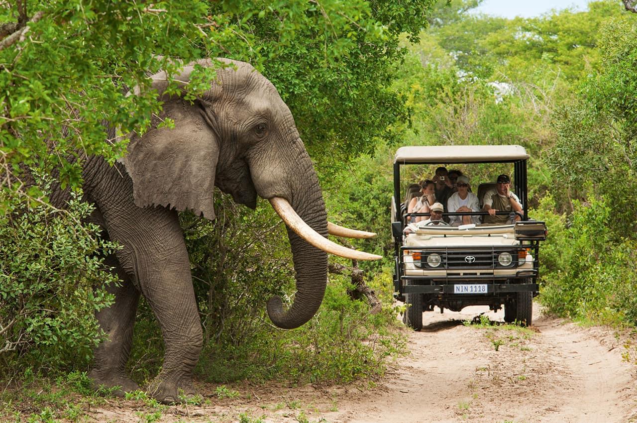 Safári_na_África_do_Sul_-_Elefantes.jpg