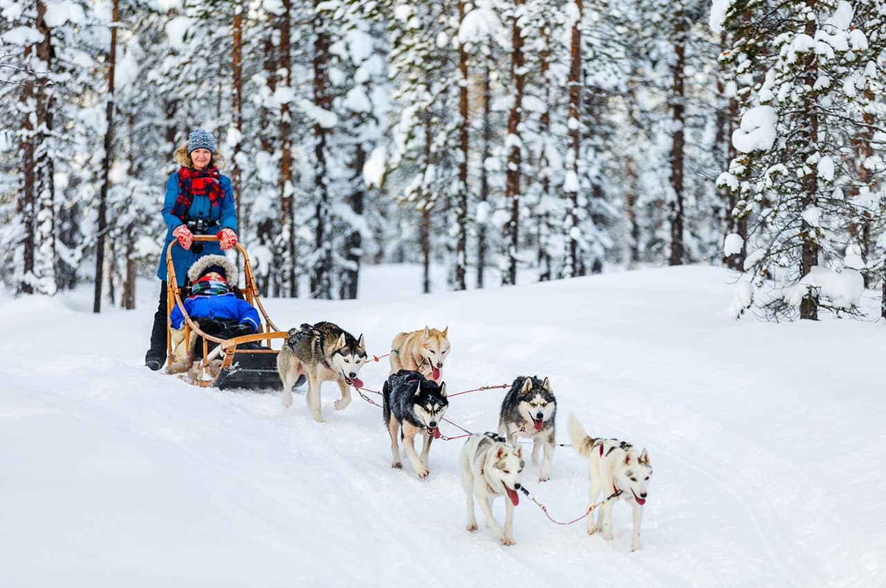 Trenó de cães husky - Lapônia, Finlândia