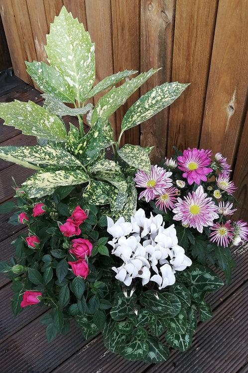 Composition 4 plantes
